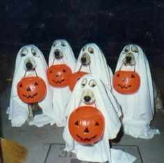 What I Like About Fall   Ghostly goldens practice for Halloween. Boooo!   #halloweencostumes for your #dog