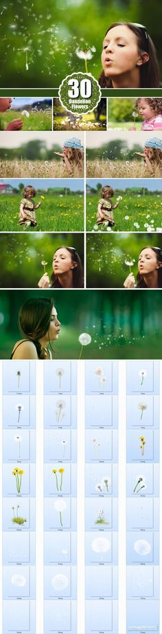 Dandelion flowers Photo Overlays. Photoshop Layer Styles. $10.00