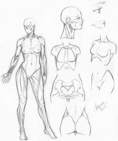 http://bambs79.deviantart.com/art/Random-anatomy-sketches-6-318574043
