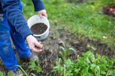 Grass Fertilizer, Fertilizer For Plants, Organic Fertilizer, Types Of Grass, Grass Type, Green Lawn, Green Grass, Turf Builder, Jars
