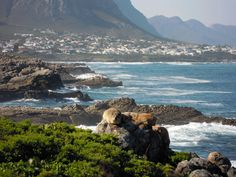 Hermanus - a small seaside holiday resort renowned for its incredible whale-watching opportunities ! A few hours drive from Cape Town. The Beautiful Country, Beautiful Places, South Afrika, Places Worth Visiting, Namibia, Seaside Holidays, Passport Stamps, Seaside Village, Holiday Places