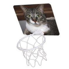 Cat Looking at You  Pet Tabby Cat Face Photo Mini Basketball Backboard - animal gift ideas animals and pets diy customize