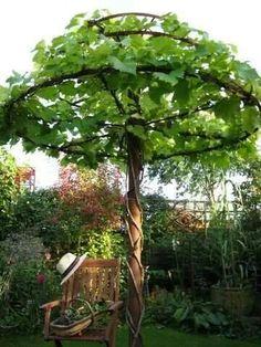 Grape vine arbor!!! Bebe'!!! Love this garden grape vine arbor!!! Would be great for a children's garden!!! #jardinesideas