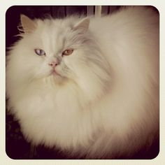 Precious cat