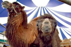 Circus Henry gastiert in Duderstadt