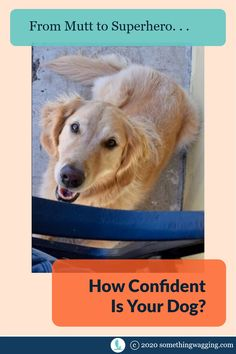 Build your dog's confidence. Take them from mutt to super hero with just a little love. And some training tips. Dogs On Boats, Dog Anxiety, Kinds Of Dogs, Out To Sea, Dog Training Tips, Anxious, Sailing, Pup, Confidence