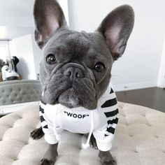 Pet Dogs, Dogs And Puppies, Pets, French Bulldog Clothes, Designer Dog Clothes, Dog Hoodie, Dog Jacket, Pet Clothes, Clothes Sizes