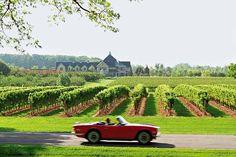 vineyards, Niagara-on-the-Lake, Ontario, Canada