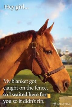 If my horse ever did this I would die of happiness. Rather he usually goes through three blankets a winter.