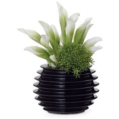Dot & Bo Orbit Ribbed Vase (21 CAD) ❤ liked on Polyvore featuring home, home decor, vases, plants, fillers, decor, black, modern home accessories, modern vase and ribbed vase