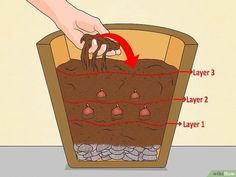 How to Grow Tulips in Pots. Tulips make for a beautiful indoor or outdoor potted plant that can bloom yearly if planted and cared for correctly. To grow tulips in pots, you'll need the right pot, soil, and approach. Because tulips need to. Growing Tulips, Planting Tulips, Tulips Garden, When To Plant Tulips, How To Grow Tulips, Outdoor Pots, Outdoor Living, Outdoor Ideas, Outdoor Decor