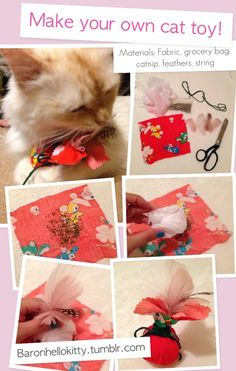 Make your own cat toy! Second Hope Circle helps special needs pets in Ontario find homes through promotion, education and funding! www.secondhopecirle.org