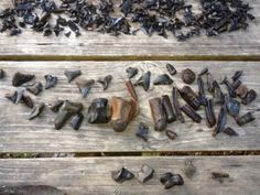 fossil tour finds from Peace River expedition