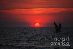 Myrtle Beach Sunrise 2 by Gordon Mooneyhan