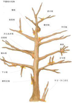 「剪定」の基本。意味・方法・種類から切り戻しとの違いとは? Bonsai Pruning, Tree Pruning, Bonsai Plants, Japanese Plants, Japanese Tree, Bonsai Tree Care, Indoor Bonsai Tree, Conifer Trees, Deciduous Trees