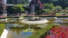 Spitting frogs and lily pads at Butchart Gardens, Victoria, B.C.