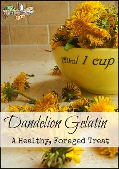 Wondering what to do with your dandelions? Forage them and make dandelion gelatin, of course! Using your favorite healthy sugar, make this today!