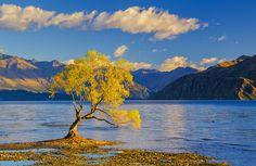 Wanaka tree by Alexander Novickov - Photo 115426523 - 500px