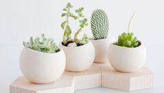 Geen kleine kut cactusjes | Boom in je huis | Wonen voor Mannen