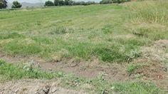 #Breves Sagarpa buscará ampliación de ciclo de riego en apoyo a productores de la Laguna. http://ift.tt/2rsTcy5 Entérese en #MNTOR.