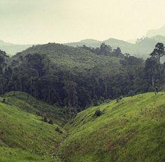 Diario de viaje 5 – Trekking por Nam Tha (2º día)