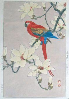 Red Macaw - Light Background, 1937-03 - Hodo Takemura