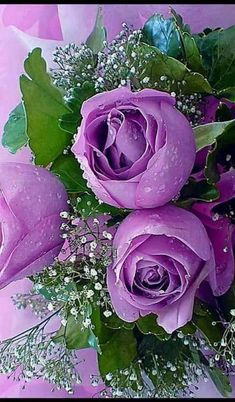 Captivating Why Rose Gardening Is So Addictive Ideas. Stupefying Why Rose Gardening Is So Addictive Ideas. Amazing Flowers, Beautiful Roses, My Flower, Beautiful Flowers, Beautiful Pictures, Lavender Roses, Purple Flowers, Red Roses, Bouquet Champetre