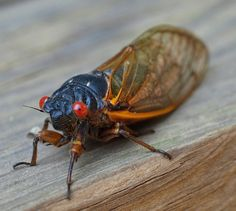 US East Coast Braces For The Onslaught Of The 17-Year Cicadas Kids News Article