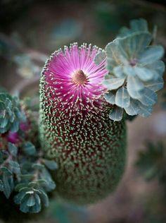 "ollebosse: "" (via Flower) """