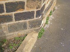 Cut Mark: Emley, 1 Windmill Hill Lane    SE 22503 13582