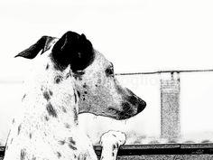 Cachorro en carbonilla