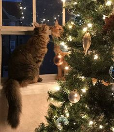 Photos, which capture the sincere feelings of these cute kittens, won the hearts of many people. A young couple from the state of Florida sheltered two cats . Animal Gato, Amor Animal, Animals And Pets, Funny Animals, Cute Animals, Funny Cats, Animals Images, Christmas Animals, Christmas Cats