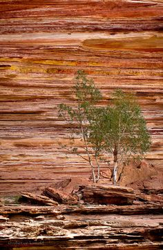 Karijini national park, western australia by robert van koesveld perth western australia, australia travel Perth Western Australia, Australia Travel, Travel Pictures, Cool Pictures, Places To Travel, Places To See, Largest Countries, Wonderful Places, Beautiful World