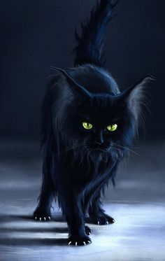 "black cat - this is what I visualize as a ""witch's cat"" at halloween.  Grumpy and mysterious!"