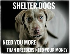 I try not to get upset when someone buys from a breeder but the truth is it breaks my heart.