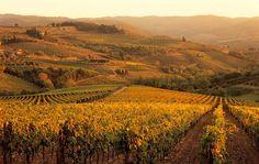 tuscany-1.jpg (immagine JPEG, 898×570 pixel)