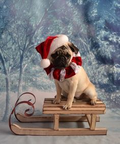Christmas Santa Pug Puppy