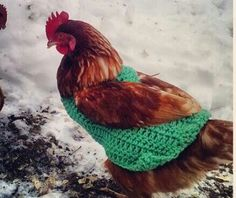Sweater for Baron Von Underbeak  $10.00 each for Chicken Sweater Crochet Pet, Crochet Animals, Chicken Sweater, Baron, Pet Clothes, Jumpers, Rooster, Projects To Try, Feather