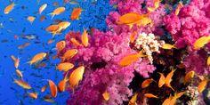 Unterwasserwelt in Hurghada