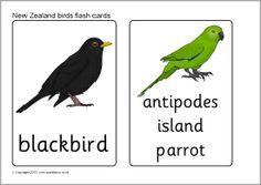 New Zealand birds flash cards (SB9727) - SparkleBox
