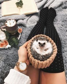 Discovered by αη∂яεα αℓsα. Find images and videos about cute, adorable and animal on We Heart It - the app to get lost in what you love. Hedgehog Care, Pygmy Hedgehog, Baby Hedgehog, Hedgehog Pet Cage, Cute Little Animals, Cute Funny Animals, Cute Animal Photos, Cute Creatures, Animals Beautiful