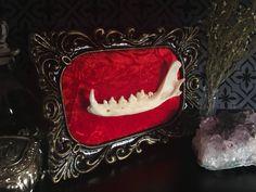 Victorian Red Fox Jaw Bone Baroque Frame, Taxidermy, Fox Taxidermy, Victorian, Memento Mori, Oddity, Macabre, Gothic Decor, by beyondthedarkveil on Etsy https://www.etsy.com/ca/listing/546146176/victorian-red-fox-jaw-bone-baroque-frame