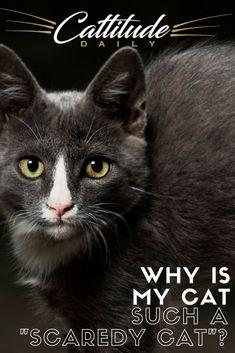 900 Cat Care Tips And Behavior Ideas In 2021 Cat Care Cat Care Tips Indoor Cat