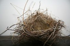 Nest - I just love them and have several around the house.....sigh
