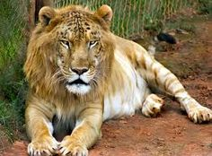 Image result for animals