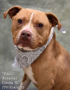 Still listed. Juky 11, 2017. ●7•11•17 SL● I'M EDDIE!  Dogs for adoption,euthanization,rescue,sponsor