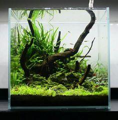 Nano Aquarium, Aquarium Fish, Nano Cube, Fish Home, Nano Tank, Fish Ponds, Vivarium, Cichlids, Aquascaping