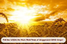 Tell the USDA: No More Field Trials of Unapproved GMO Crops!