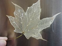 """Learn how to make skeleton leaves with this step-by-step guide from HST! You'll learn how to remove leaf tissue so that their """"veins"""" show. Leave In, Leaf Projects, Diy Projects To Try, Autumn Crafts, Nature Crafts, Summer Crafts, Leaf Crafts, Diy And Crafts, Kid Crafts"""
