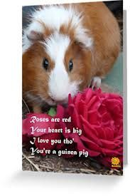 valentine guiena pigs - Google Search
